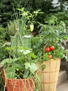 Grow a bounty of edibles in these veggie container gardens. Details + more vegetable garden ideas: http://www.midwestliving.com/garden/container/vegetable-container-garden/?page=8,0