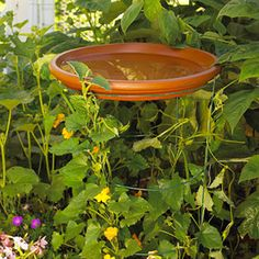 Hovering Saucer--a large terra cotta saucer sits on a tomato trellis server double duty as a birdbath holder and trellis.