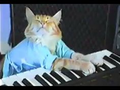 """In 1984, performance artist Charlie Schmidt manipulated the paws of his   tabby Fatso, so that it appeared as if the cat was playing the keyboard. He uploaded the video to YouTube in 2007. Two years later, it became a sensation when Brad O'Farrell posted a mashup of a man falling down an escalator with the cat, entitled """"Play him off, Keyboard Cat"""" (akin to giving someone the hook for a bad performance). Keyboard Cat is on Twitter, Facebook, Tumblr, and has a website, blog, and a meme…"""