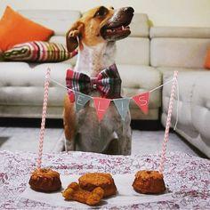 Feliz Cumpleaños, @elis_thedog !  Estamos felices de haber sido parte de esta celebración!  #PerroFeliz #chachayelgalgo #pasteleriacanina #paletasparaperros #amorperruno #mascotas #peluditos #alimentacioncanina #petfriendlycali #tortasparaperros #cumpleañosperruno #cumpleañosparaperros #YoCreoEnCali #cali #calico #colombia #criolla #adoptanocompres #razaunica #criollitacolombiana