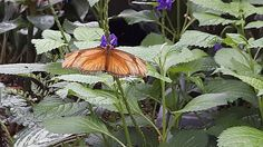 Butterfly Artwork, Butterfly Design, The World's Greatest, Fine Art America, Lisa, Photos, Pictures, Wall Art, Green