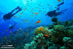 Colorful corals, sea anemones, sponges, shellfish, rare species of fish, sunken cities and forgotten shipwrecks are waiting to take you to a magical world! http://www.dreamingreece.com/activities/scuba-diving-in-greece -  #scubadiving #greece #dreamingreece #watersports