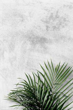 Areca palm on gray background , Grey Wallpaper Phone, Leaves Wallpaper Iphone, Flower Background Wallpaper, Plant Wallpaper, Aesthetic Iphone Wallpaper, Gray Background, Aesthetic Wallpapers, Hipster Background, Flowery Background
