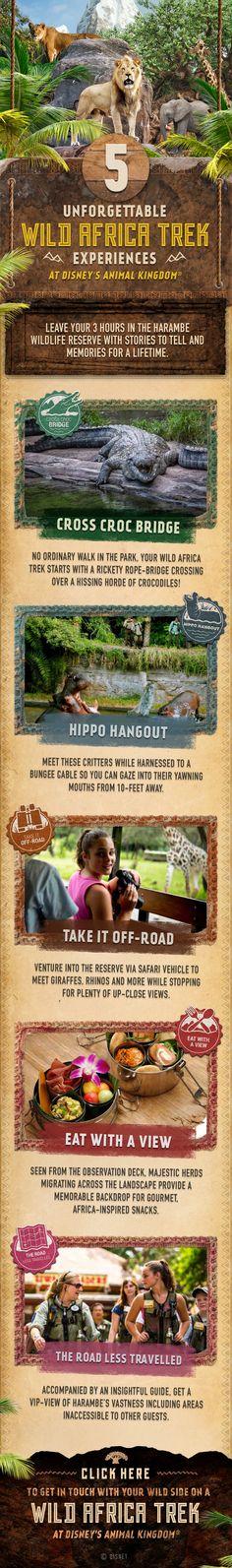 5 inolvidables experiencias en Wild Africa Trek en Disney's Animal Kingdom en Walt Disney World. Agregue aventura a su vacación con su familia!