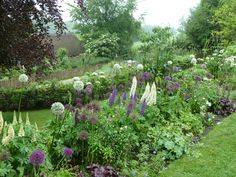mixed border with lupines, allium, heuchera and lady's mantle