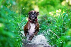 The Internet Is In Love With This Photographer's Dog's Hilarious Expressions - UltraLinx