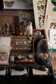 Love the curiosities & botanicals displayed!