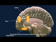 Cerebro adolescente, excelente vídeo