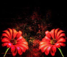 Red daisies - abstract digital art by Tracey Everington of Tracey Lee Art Designs Flower Artwork, Colorful Artwork, Abstract Flowers, Flower Prints, Yellow Roses, Purple Flowers, Red Roses, Abstract Digital Art, Abstract Print