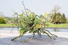 curly willow, Oasis sphere, grass, succulents, something big to replace anthirium