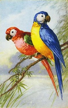 Flowers and parrots from Catherine Klein