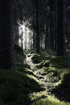 ImageFind images and videos about nature, tree and forest on We Heart It - the app to get lost in what you love. Tree Forest, Forest View, Dark Forest, Forest Trail, Conifer Forest, Forest Path, Magical Forest, Beautiful Forest, Forest Scenery