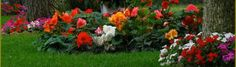 Vrei sa te eliberezi de stres? Iti cade parul? Ti se rup unghiile? Ai pielea uscata? Nu te necaji, exista solutii! Prin consumul de vitamine din complexul B aceste simptome pot fi tratate . Aceste vitamine sunt indispensabile în special… Flowers, Plants, Plant, Royal Icing Flowers, Flower, Florals, Floral, Planets, Blossoms