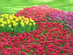 Flower Garden Landscape Ideas * To view further for this item, visit the image link.