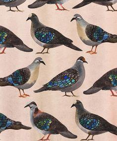 /// pigeon