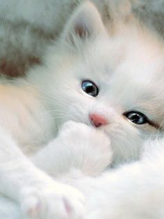 cute and cuddly kitten!