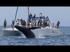 ***Whale Watching video guide, Hervey Bay Queensland Australia - YouTube