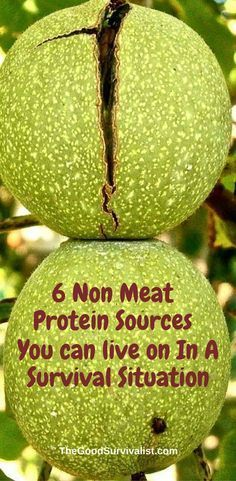 Having a source of protein in a survival situation is critical. Most people think that they can hunt for what they need in regards to protein sources. Some people (probably many people) just won't kill an animal for food which is a topic for another post. http://www.thegoodsurvivalist.com/6-non-meat-protein-sources-you-can-live-on-in-a-survival-situation/
