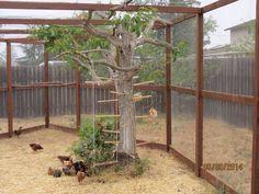 Chicken coop run Backyard Chicken Coop Plans, Chicken Coop Run, Chicken Pen, Chicken Coup, Chicken Garden, Chickens Backyard, Keeping Chickens, Raising Chickens, Chicken Enclosure