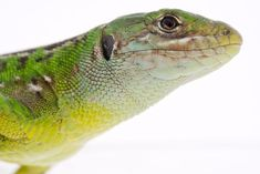 10 Fun Facts About Reptiles: Most Reptiles Have Three-Chambered Hearts Explore the great outdoors to learn everything about reptiles! The Great Outdoors, Reptiles, Fun Facts, Hearts, Explore, Animals, Wtf Fun Facts, Animales, Animaux
