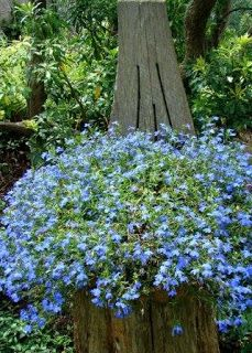 Crystal Palace' Lobelia in a hanging basket upon a carved tree stump. Love Garden, Summer Garden, Lawn And Garden, Tree Stump Planter, Tree Stumps, Landscape Design, Garden Design, Garden Trees, Fairies Garden