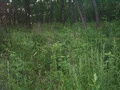 Forest_Grass_Primorsky_Krai.jpg (1600×1200)