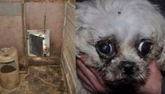 Massive Puppy Mills Get Permission To Breed Even More Dogs For the love of animals. Pass it on.