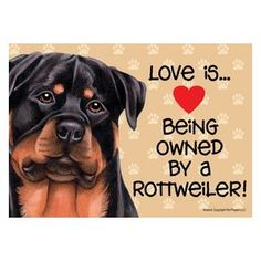 Love is being owned by a Rottweiler!