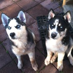 They were cute puppies.