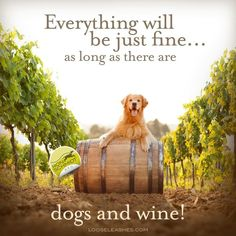 <3 both dogs & wine!