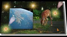 Moose Art, Blog, Animals, Animales, Animaux, Blogging, Animal, Animais
