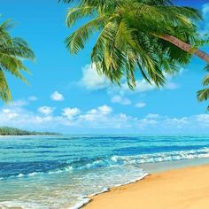 Summer Sea Beach  Blue Sky Photo Backdrop G-502 - 6.5'W*6.5'H*(2*2m)