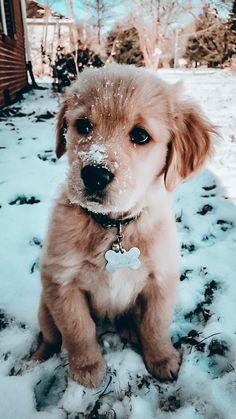 Super Cute Puppies, Baby Animals Super Cute, Cute Wild Animals, Cute Baby Dogs, Cute Little Puppies, Cute Funny Dogs, Cute Dogs And Puppies, Cute Little Animals, Cute Funny Animals