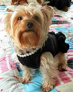 follow the pdf link for the free knit pattern to this little black dress for little dogs