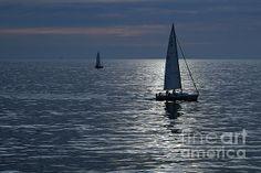 Sailboat Art, Sailboats, Pacific Ocean, The World's Greatest, San Francisco Skyline, Fine Art America, Sailing, Art Prints, Wall Art