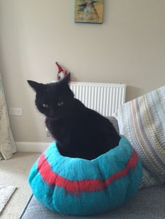 First go at wet felting. Made a cat bed/pod. Lots of hard work but both cats like it, so it looks like I've got to make another to avoid arguments!
