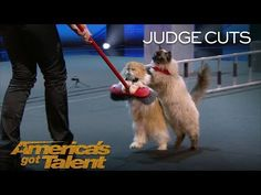 The Savitsky Cats: Trained Cats Perform Amazing Tricks With Catitude - America's Got Talent 2018 - YouTube