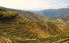 The top 5 food and drink holidays in Portugal | Via The Telegraph Travel | 5/01/2016 Our experts' pick of the top five food and drink holidays in Portugal for 2016, including wine tasting, foodie tours and traditional Portuguese cookery classes, in destinations such as Porto, the Douro Valley, Madeira and Lisbon #Portugal