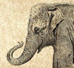 elephant durer - Recherche Google                              …