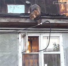 Cat enters window like a boss