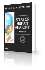 Netter Atlas of Human Anatomy 6th Edition PDF Download
