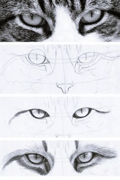 Draw Human Eyes dessin réaliste des yeux de chat dans les étapes - Cats have some of the most intriguing eyes around — which is why they're a fun drawing challenge. Learn how to draw cat eyes right meow on Craftsy! Human Eye Drawing, Realistic Eye Drawing, Drawing Eyes, Painting & Drawing, Kitty Drawing, Realistic Drawings Of Animals, How To Draw Realistic, Manga Drawing, Figure Painting