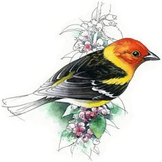 Western Tanager watercolour  bird wildlife art by RobManciniImages
