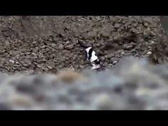 Çukura düşen yavru köpeği kurtaran kedi... - YouTube