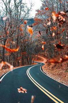 spookyshouseofhorror: Autumn Road - Autumn Blog