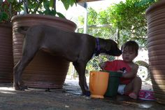 From Rags To Riches, Zsa Zsa, Amelia, Pitbulls, Facebook, Awesome, Kids, Young Children, Boys