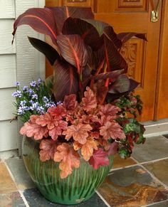 The heuchera picks up the lighter colors in tha Canna; The backs of the begonia leaves reinforces some of the darker colors. Sisyrinchium 'Devon Skies', Heuchera ' Peach Flambe' , Begonia 'Cathedral' by :Terra Nova Nurseries Flower Pots, Garden Inspiration, Heuchera, Plants, Fall Flower Pots, Fall Flowers, Container Flowers, Garden Planters, Outdoor Fall Flowers