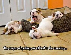 Funny Stages Getting Out Of Bed Puppies