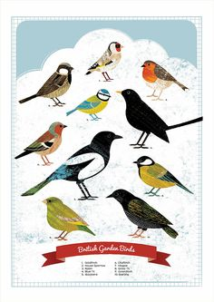 British Garden Birds - Kate McLelland Illustration think how many pests these lovelies can eat?