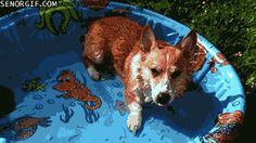 This Kiddy Pool Benefits From The Corgi